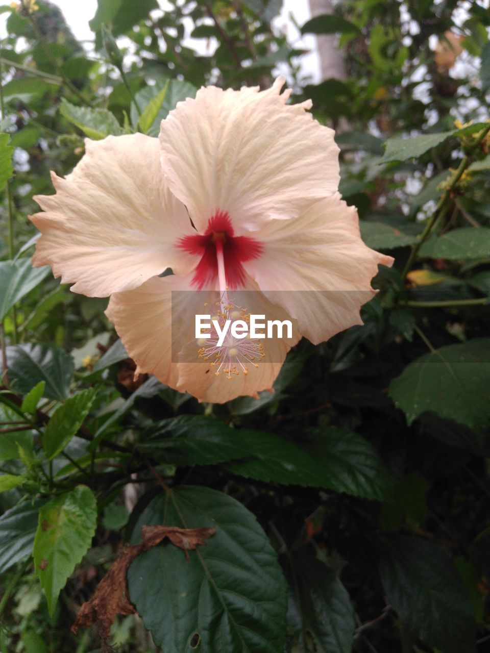 flower, growth, petal, flower head, nature, plant, fragility, beauty in nature, leaf, blooming, freshness, outdoors, day, green color, close-up, focus on foreground, no people, hibiscus