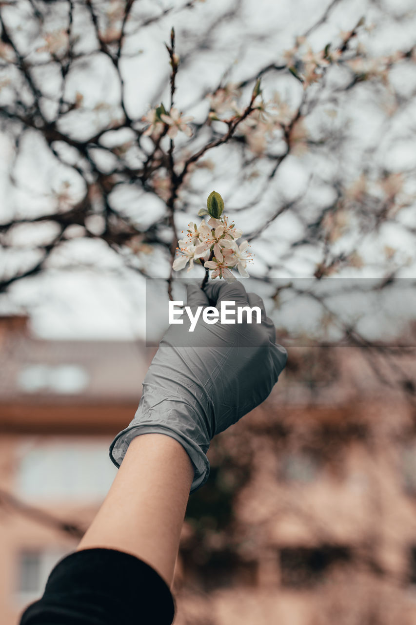 Cropped hand of woman holding cherry blossom