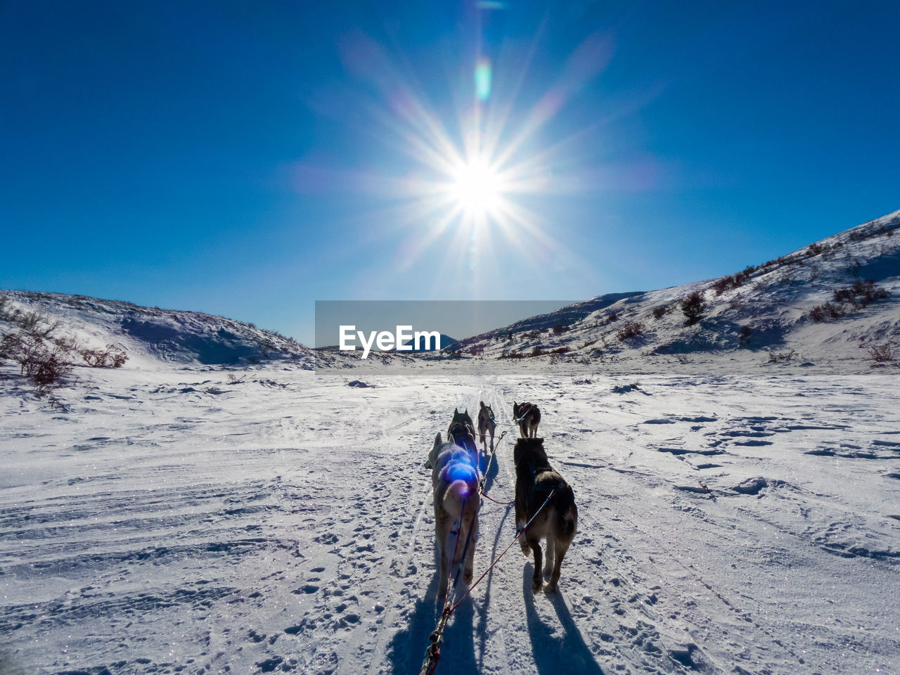 Sled dogs on snow covered mountain against sky