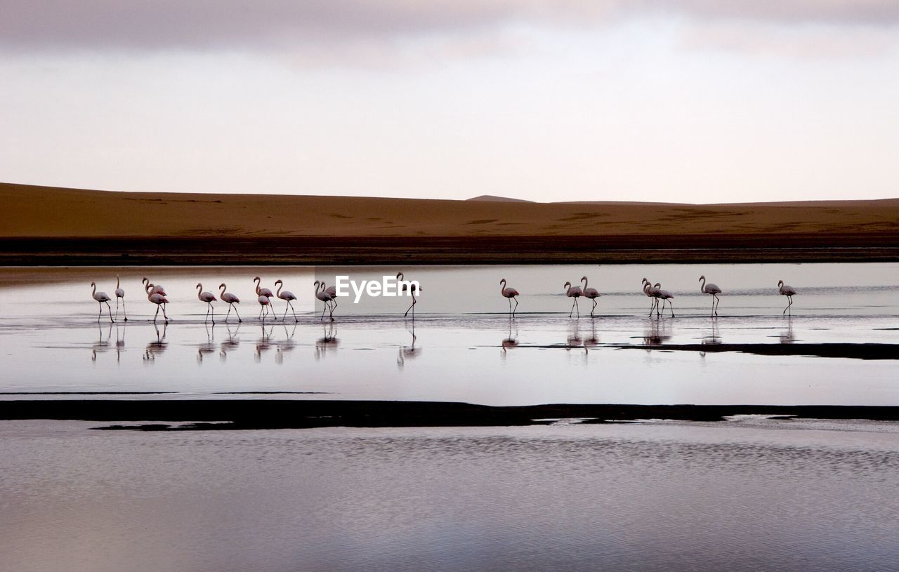 Flamingoes Perching By Lake Against Sky