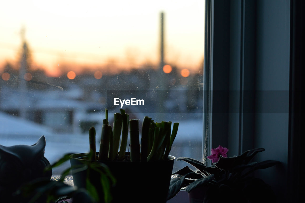 Potted Plants On Window Sill During Sunset