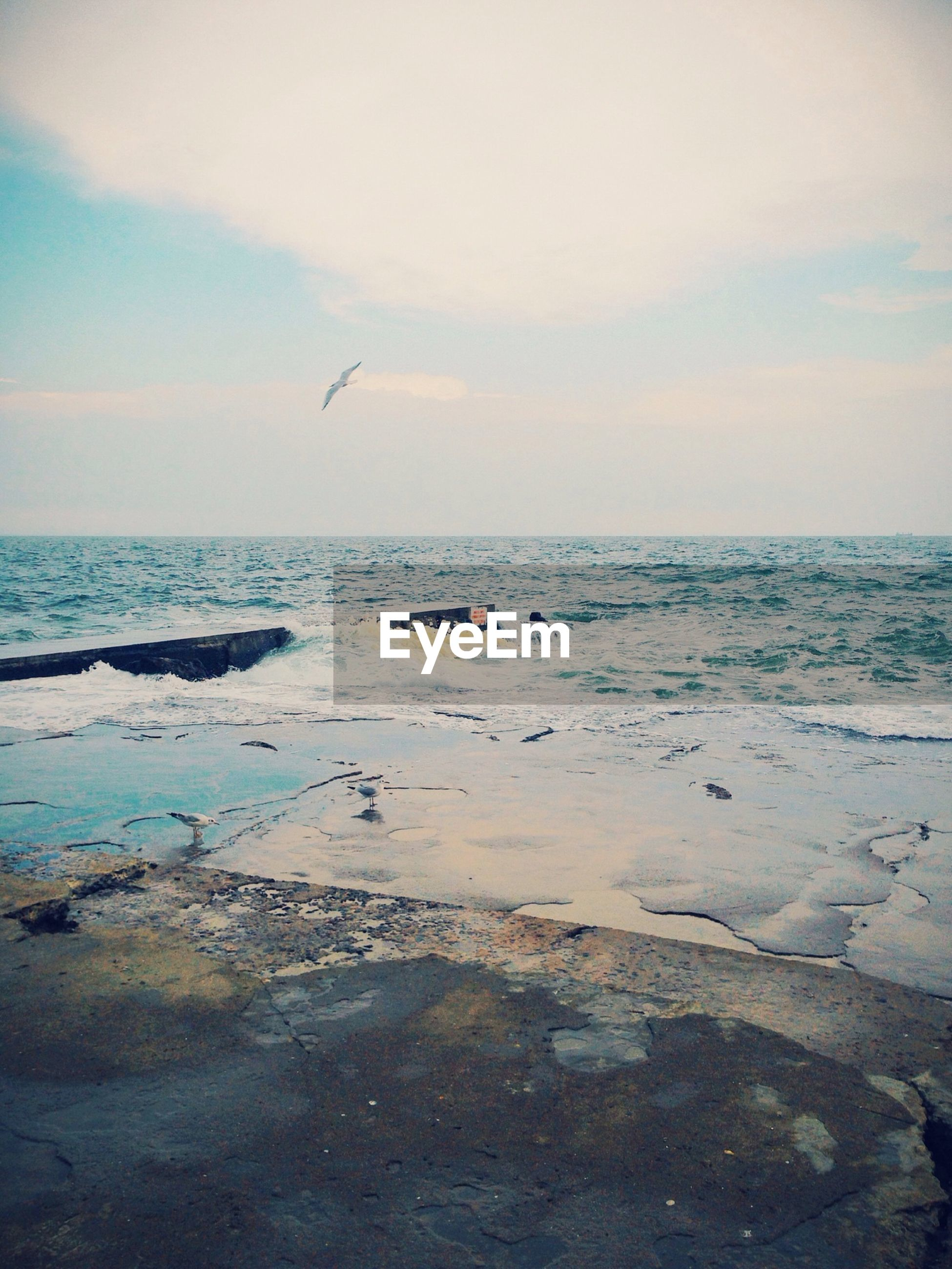 sea, horizon over water, bird, water, beach, flying, animal themes, scenics, sky, tranquil scene, shore, animals in the wild, beauty in nature, tranquility, wildlife, nature, one animal, seagull, wave, idyllic