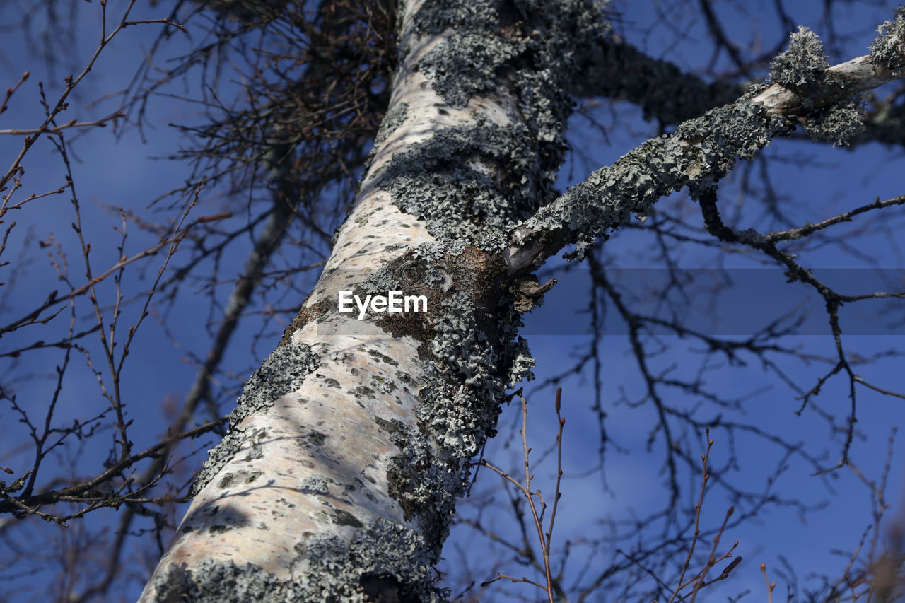 tree, tree trunk, branch, nature, day, growth, low angle view, outdoors, no people, beauty in nature, bare tree, sky, close-up