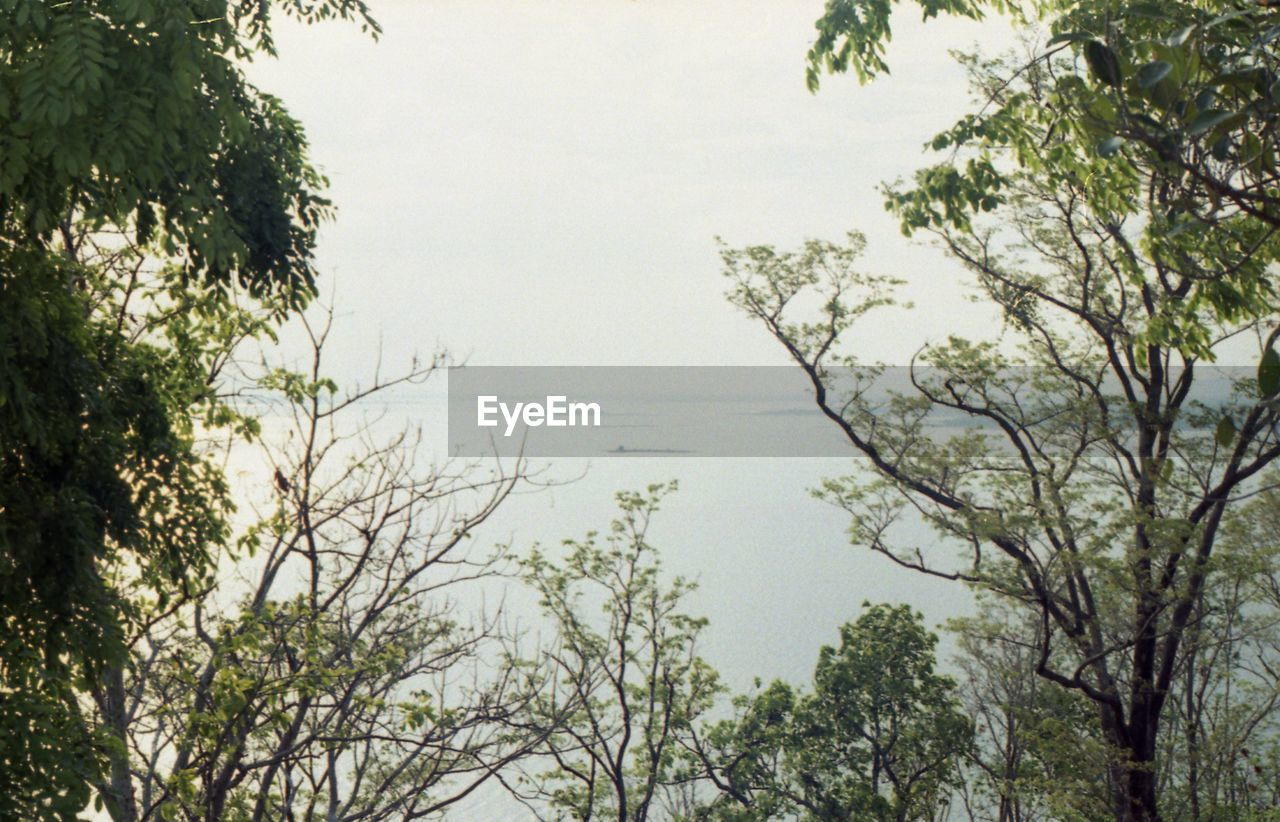 tree, plant, growth, sky, no people, beauty in nature, nature, day, tranquility, water, branch, outdoors, scenics - nature, tranquil scene, forest, land, idyllic, non-urban scene, environment