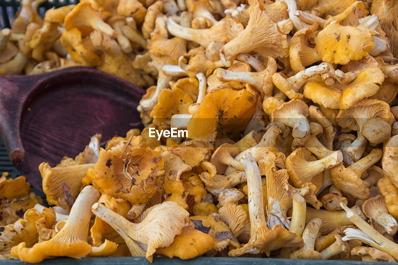 food and drink, food, freshness, no people, wellbeing, abundance, close-up, vegetable, healthy eating, still life, indoors, edible mushroom, mushroom, large group of objects, focus on foreground, market, fungus, yellow, raw food, retail, snack