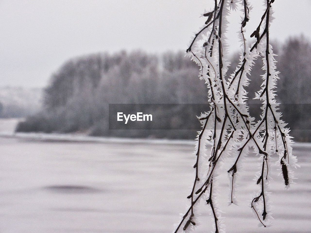 Close-up of frozen twigs against river and trees