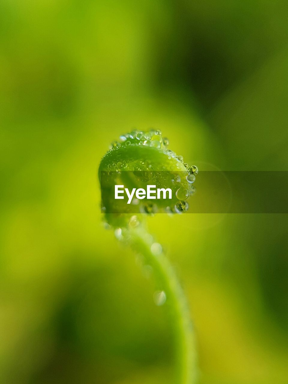plant, growth, green color, close-up, beauty in nature, vulnerability, fragility, drop, freshness, selective focus, no people, water, nature, day, beginnings, wet, focus on foreground, flower, outdoors, curled up, dew, purity, raindrop