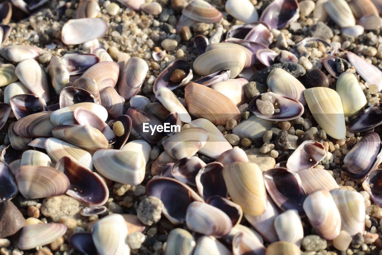 full frame, large group of objects, abundance, shell, backgrounds, no people, seashell, close-up, high angle view, animal wildlife, day, animal shell, choice, land, variation, beach, animal, selective focus, stone - object, nature, pebble