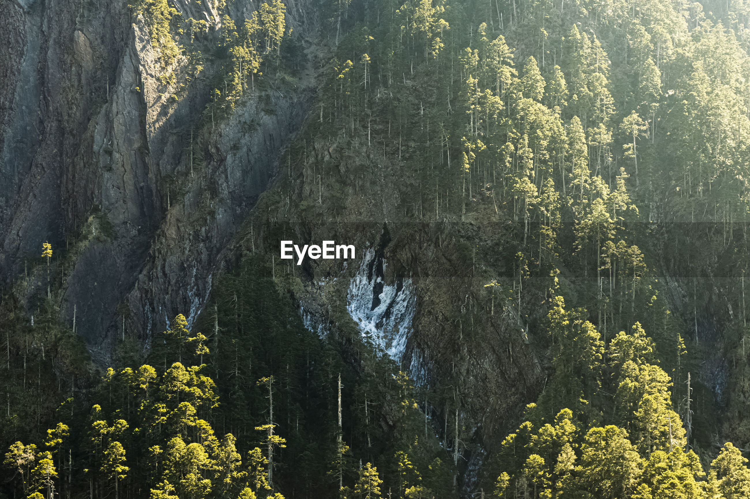 PANORAMIC VIEW OF TREES AND PLANTS IN SUNLIGHT