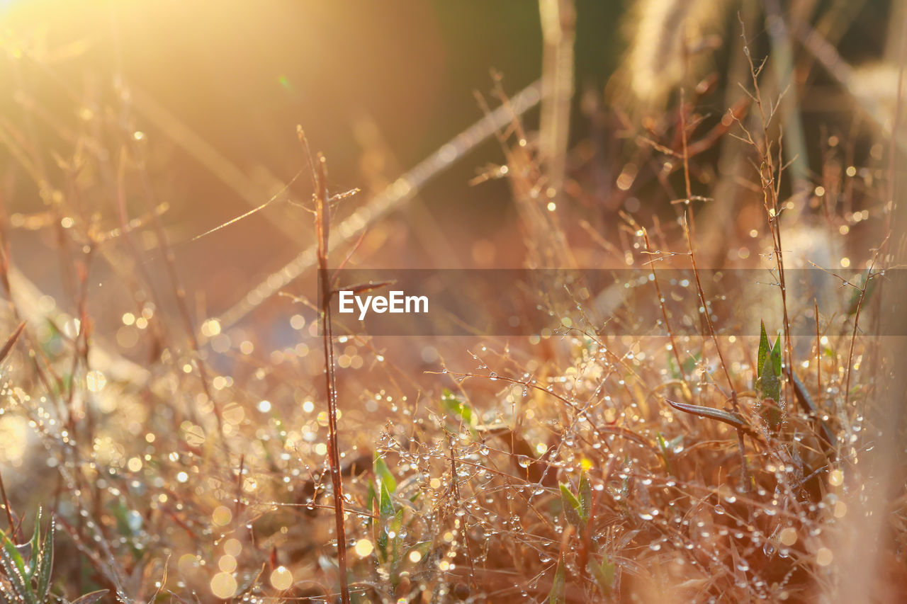 plant, growth, selective focus, sunlight, nature, land, field, tranquility, no people, day, beauty in nature, lens flare, close-up, outdoors, fragility, focus on foreground, vulnerability, grass, sunny, landscape