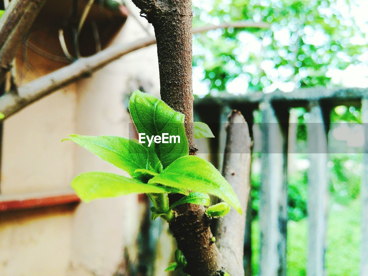 green color, leaf, growth, plant, nature, focus on foreground, one animal, no people, day, close-up, animals in the wild, animal themes, outdoors, beauty in nature, tree, freshness