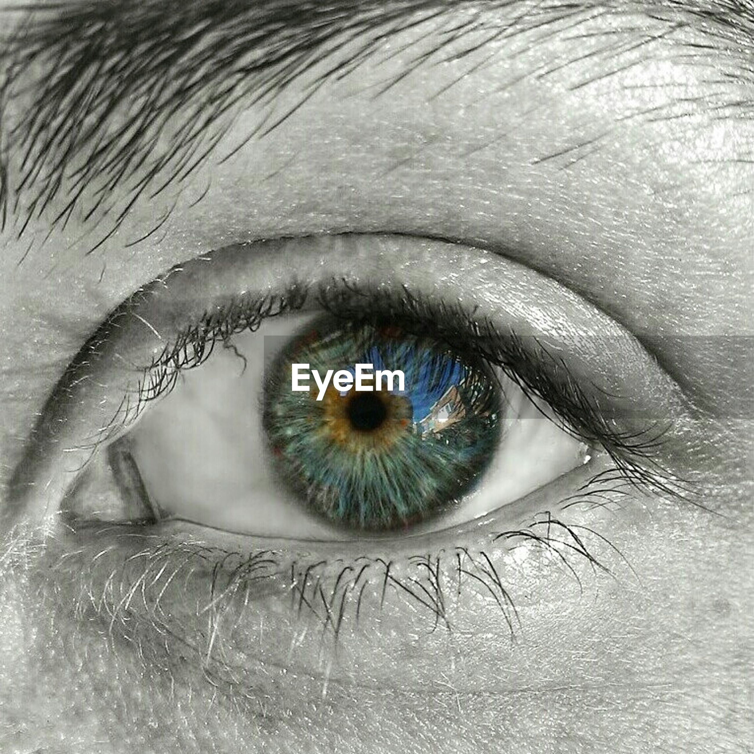 human eye, eyelash, eyesight, close-up, indoors, sensory perception, iris - eye, extreme close-up, full frame, eyeball, looking at camera, part of, portrait, backgrounds, human skin, reflection, vision
