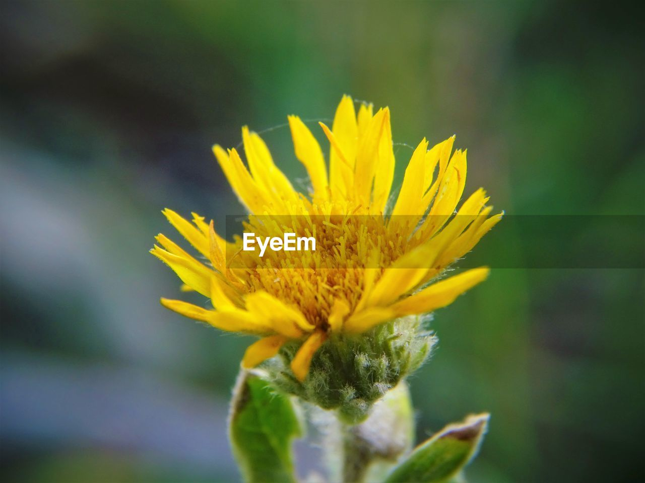 flower, yellow, nature, growth, plant, beauty in nature, fragility, petal, no people, freshness, blooming, outdoors, close-up, flower head, day