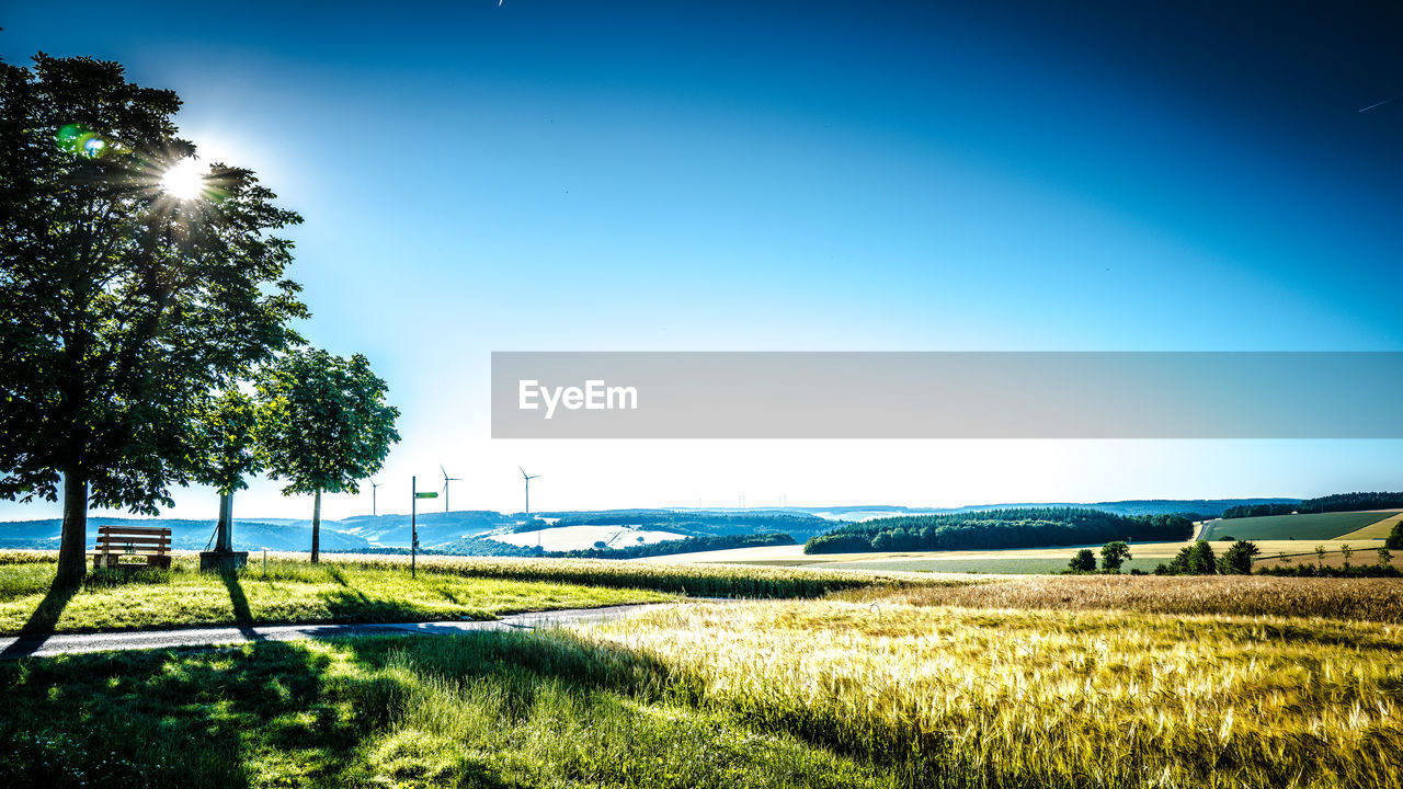 plant, sky, field, landscape, land, tree, environment, tranquility, tranquil scene, scenics - nature, grass, nature, beauty in nature, blue, day, green color, sunlight, growth, no people, clear sky, outdoors