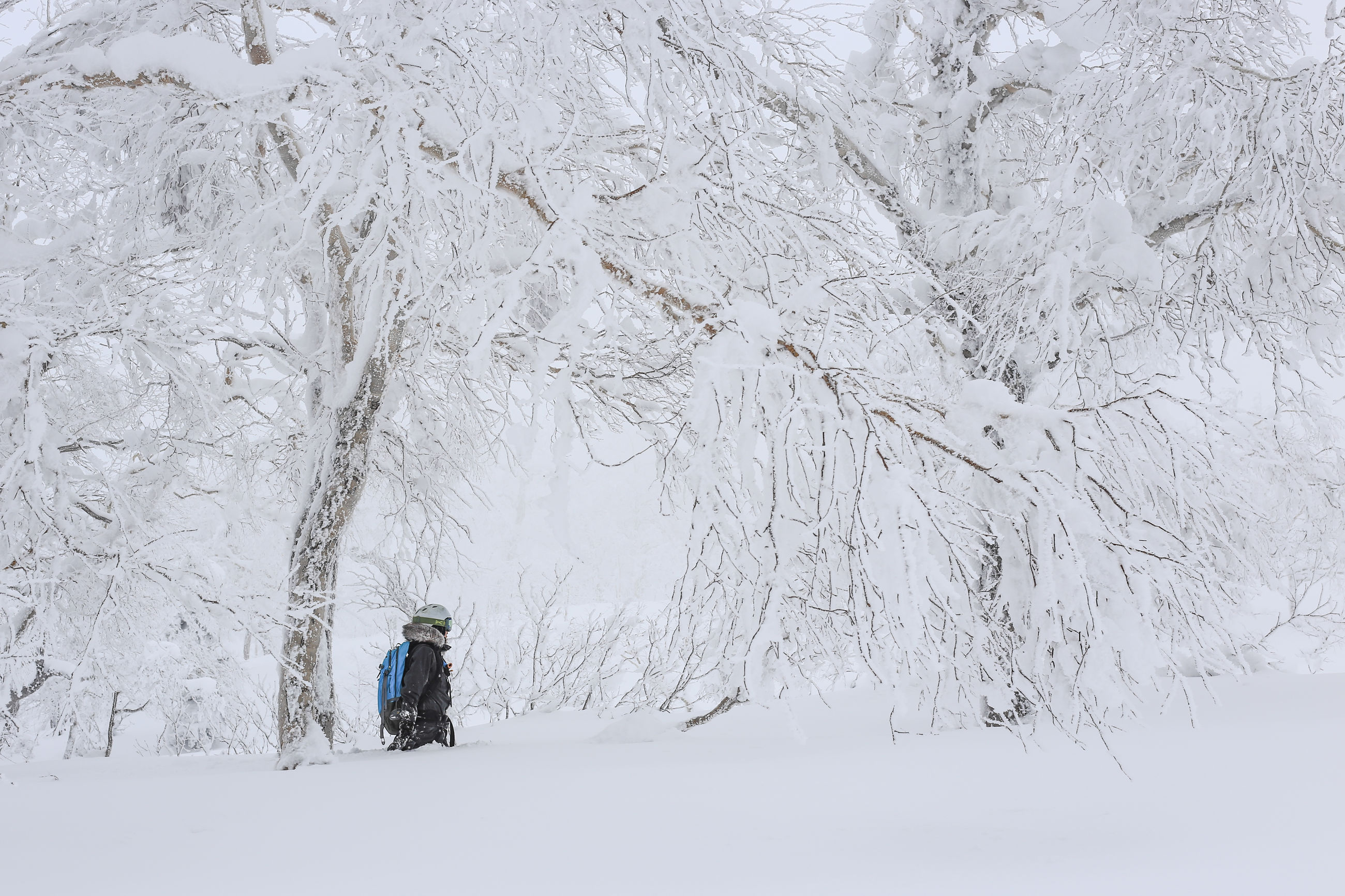 Hiker amidst snow covered bare trees in forest