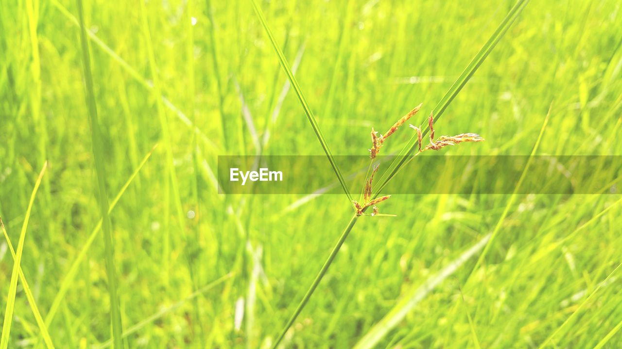 plant, green color, growth, grass, nature, animal, animal wildlife, animal themes, animals in the wild, no people, invertebrate, close-up, focus on foreground, one animal, insect, day, beauty in nature, field, selective focus, land, outdoors, blade of grass