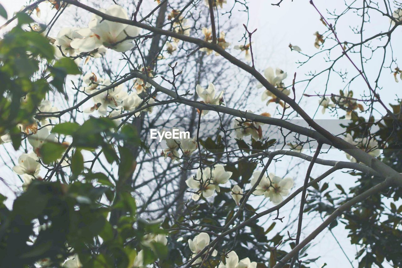 tree, branch, growth, nature, flower, beauty in nature, day, no people, low angle view, outdoors, freshness, springtime, fragility, close-up, sky