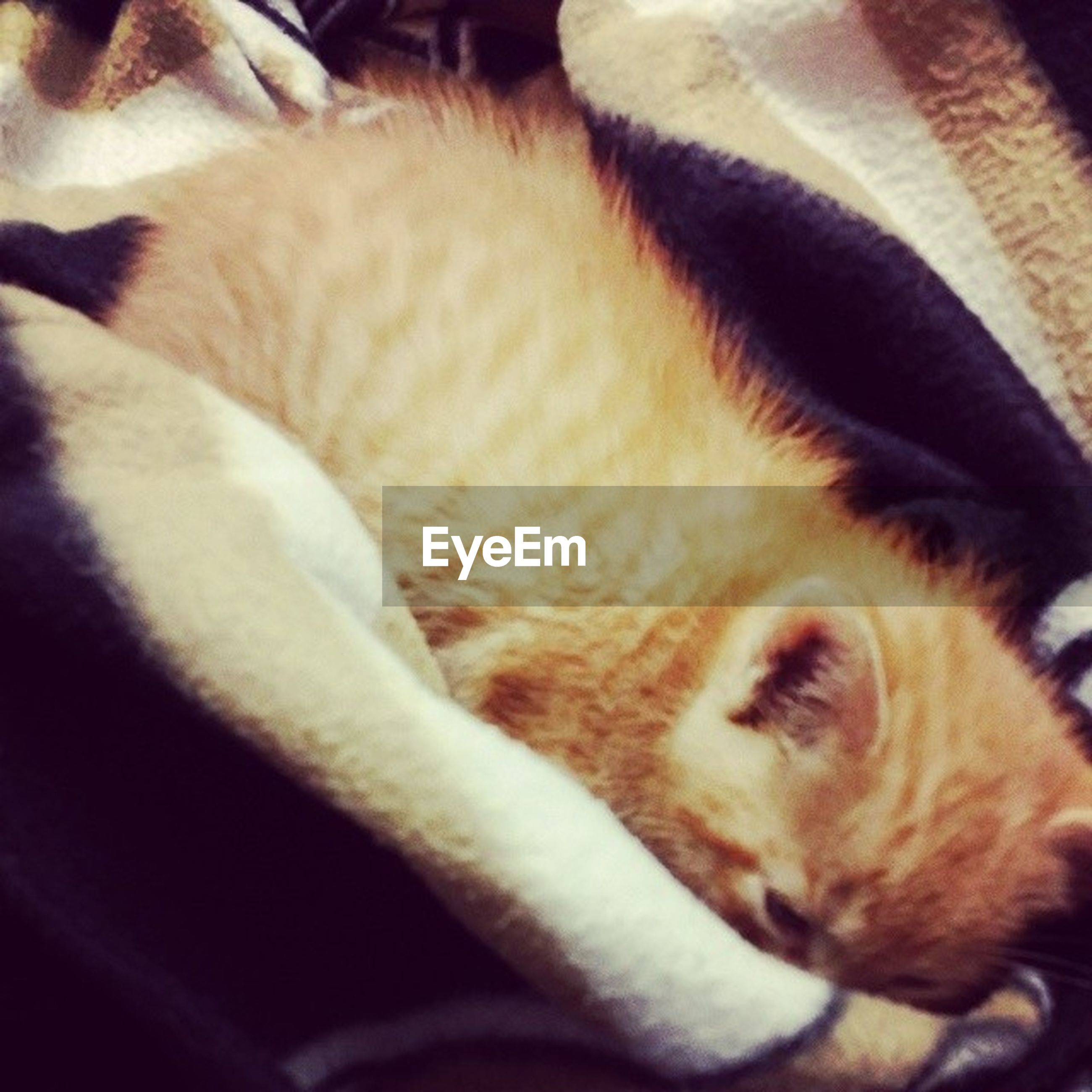 animal themes, one animal, pets, domestic animals, mammal, indoors, domestic cat, sleeping, relaxation, cat, feline, resting, close-up, lying down, whisker, animal head, eyes closed, animal body part, bed, vertebrate