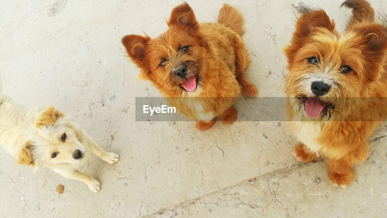 HIGH ANGLE VIEW OF DOGS