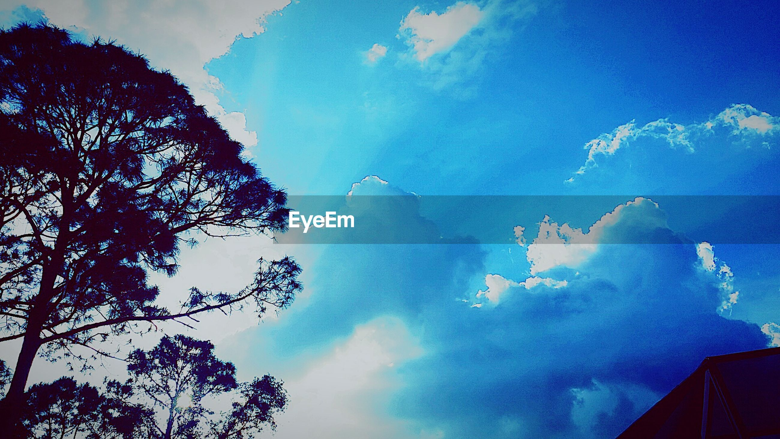 sky, low angle view, tree, cloud - sky, beauty in nature, cloudy, blue, nature, silhouette, cloud, scenics, built structure, building exterior, weather, tranquility, architecture, outdoors, high section, no people, day