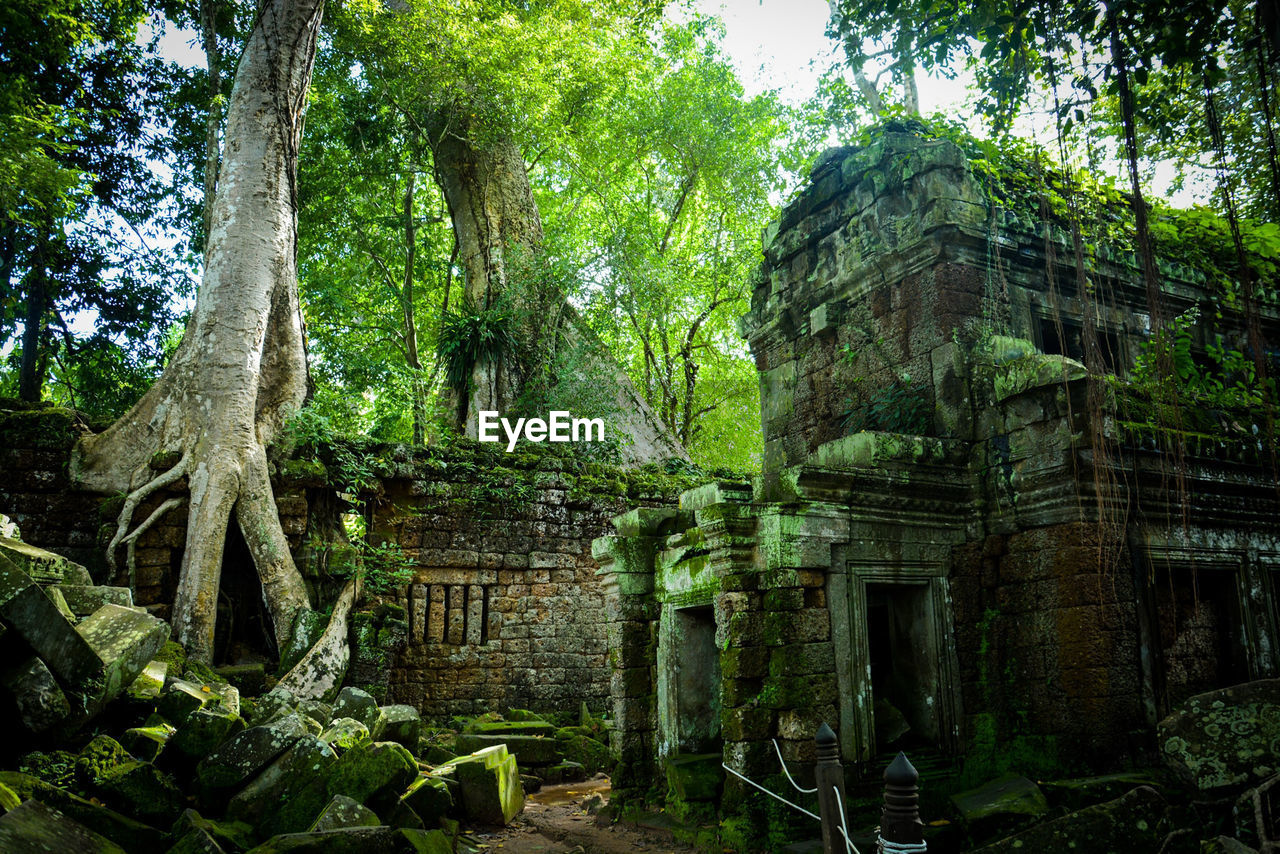 tree, plant, architecture, history, built structure, old ruin, the past, ancient, ancient civilization, nature, old, building, day, place of worship, growth, no people, building exterior, damaged, green color, forest, ruined, outdoors, archaeology, deterioration