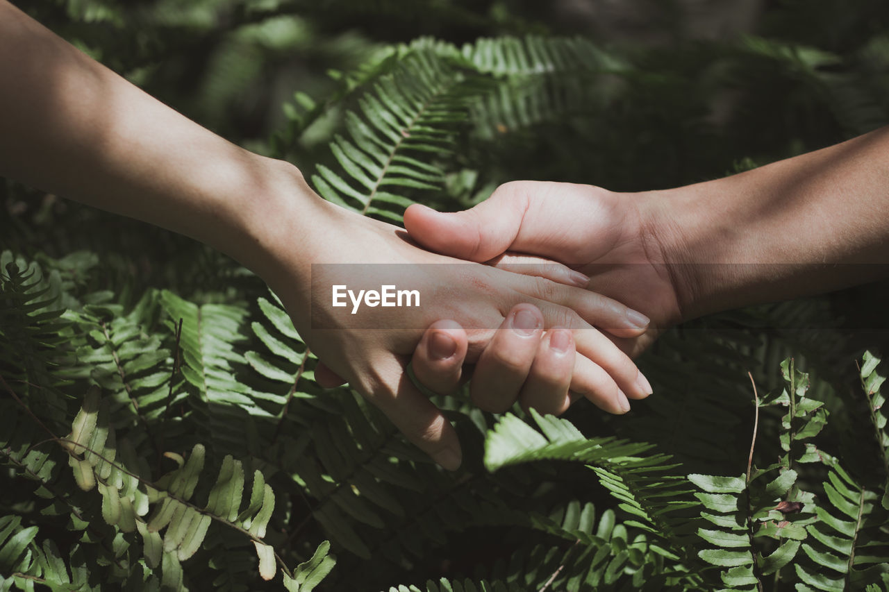 human hand, human body part, togetherness, leaf, green color, childhood, bonding, love, plant, growth, family with one child, touching, real people, day, close-up, friendship, tree, care, women, nature, outdoors, men, people