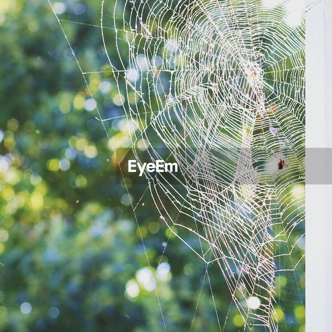 spider web, web, focus on foreground, spider, nature, close-up, outdoors, no people, fragility, day, trapped, intricacy, one animal, survival, beauty in nature, weaving, complexity, animal themes, freshness