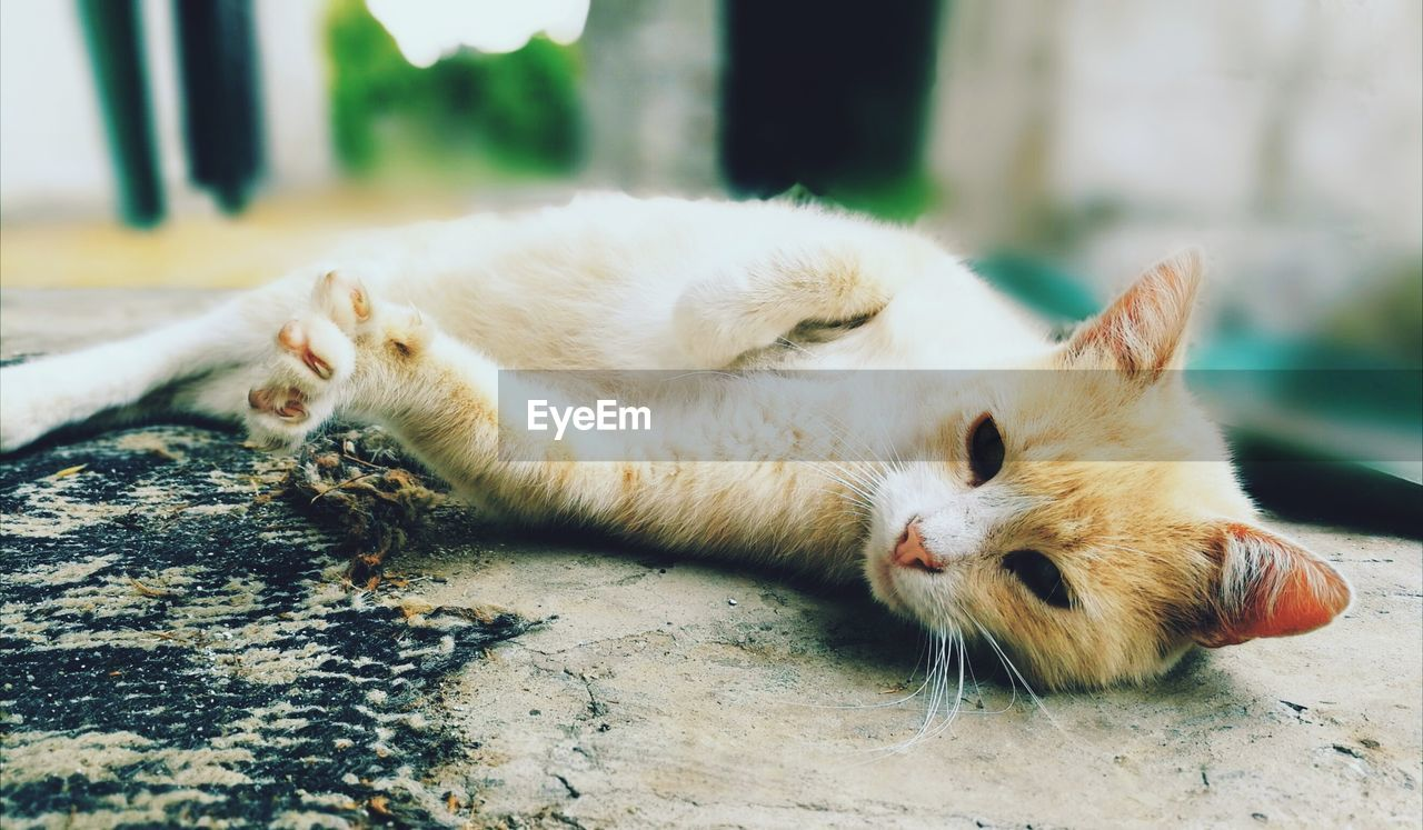 mammal, animal themes, animal, cat, feline, domestic cat, one animal, domestic, pets, vertebrate, relaxation, domestic animals, lying down, no people, focus on foreground, day, resting, close-up, whisker, eyes closed