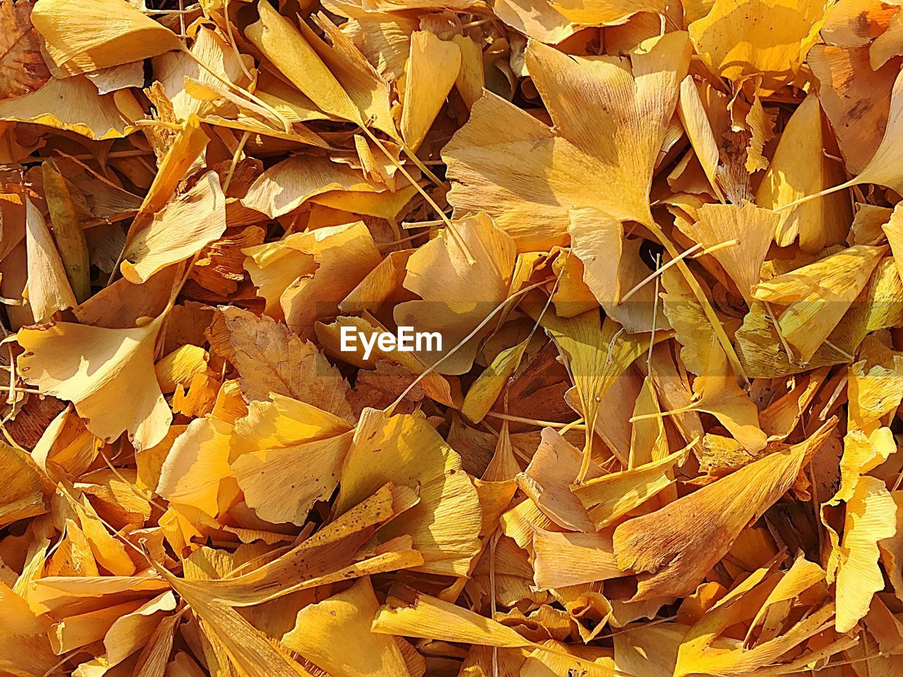 yellow, crumpled, crumpled paper, backgrounds, fragility, garbage, full frame, paper, no people, leaf, business finance and industry, day, autumn, close-up, nature, outdoors