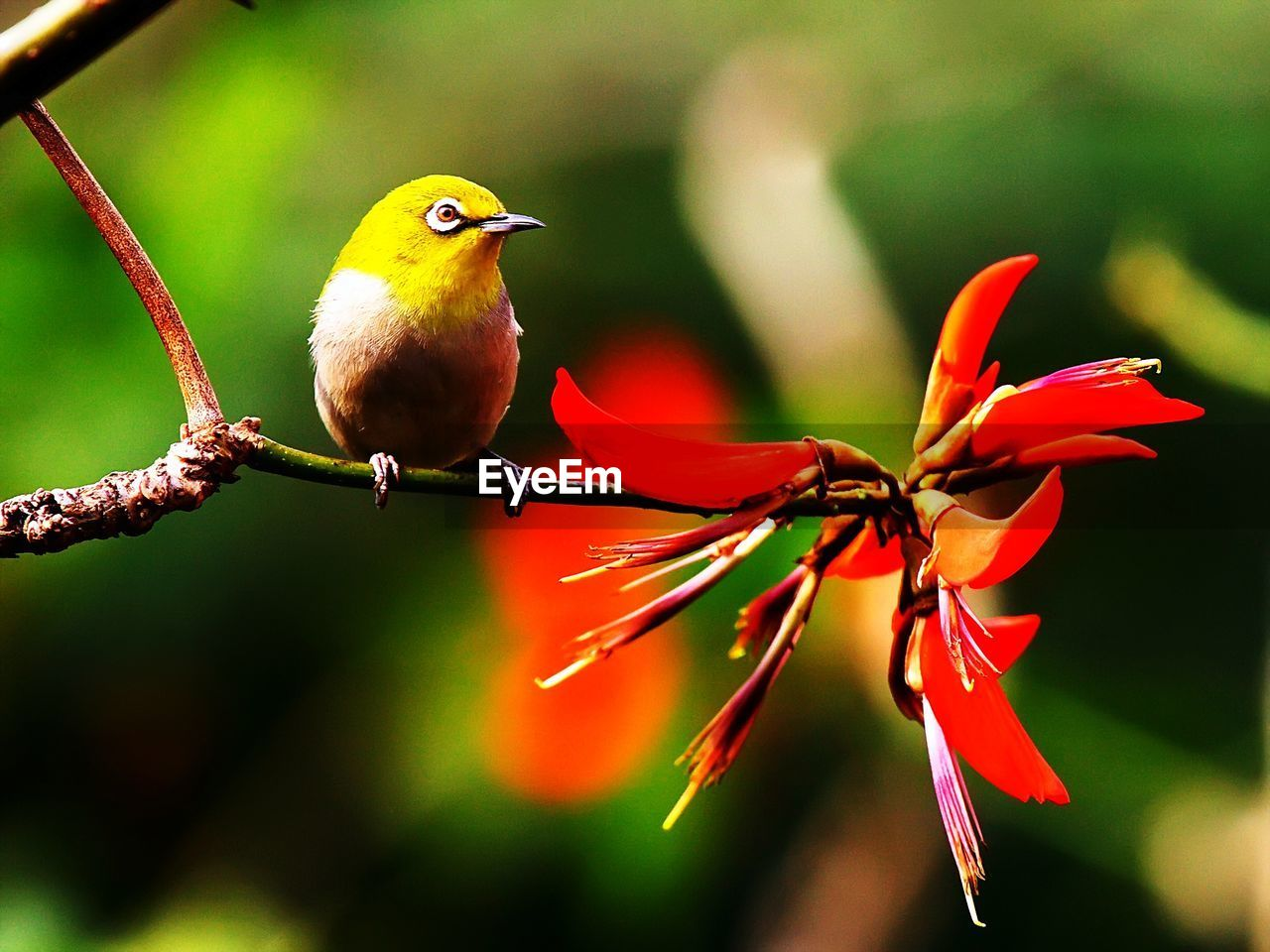 nature, beauty in nature, focus on foreground, one animal, animals in the wild, flower, outdoors, day, red, bird, growth, animal themes, close-up, no people, plant, perching, flower head