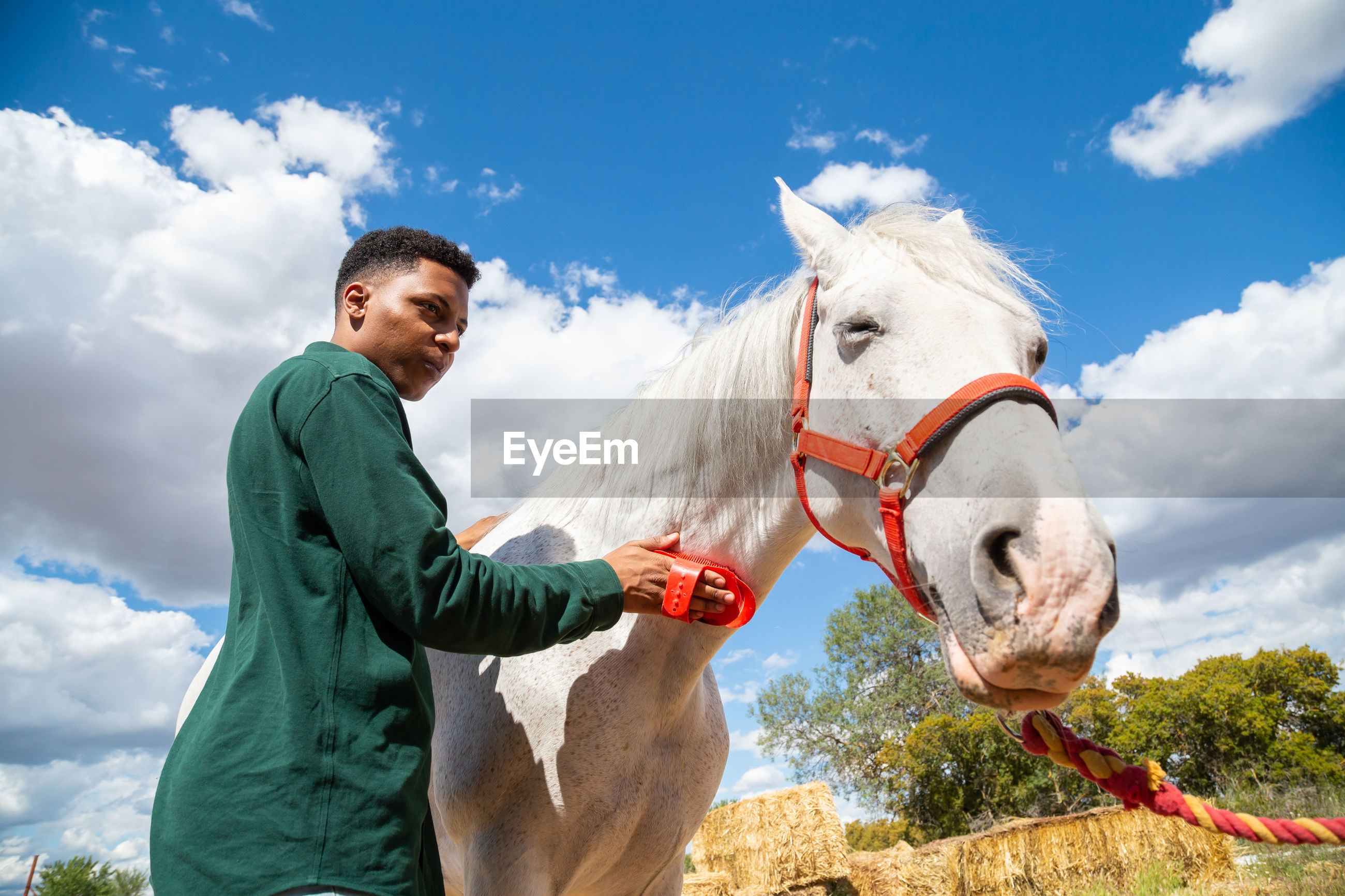 Man grooming horse while standing against sky