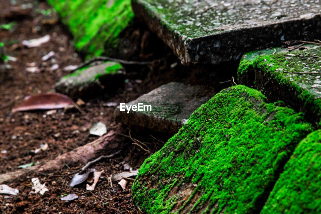 no people, green color, close-up, day, nature, outdoors, freshness