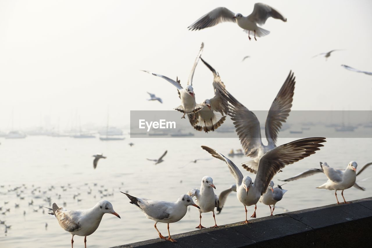 group of animals, bird, animals in the wild, vertebrate, animal, animal wildlife, animal themes, flying, seagull, large group of animals, water, sky, spread wings, nature, no people, sea, flock of birds, beach, focus on foreground