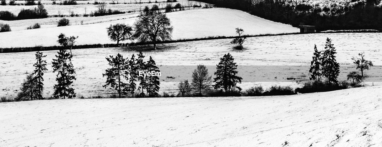 snow, winter, cold temperature, plant, tree, covering, field, land, nature, tranquility, beauty in nature, day, no people, white color, tranquil scene, scenics - nature, environment, non-urban scene, landscape, outdoors, snowcapped mountain