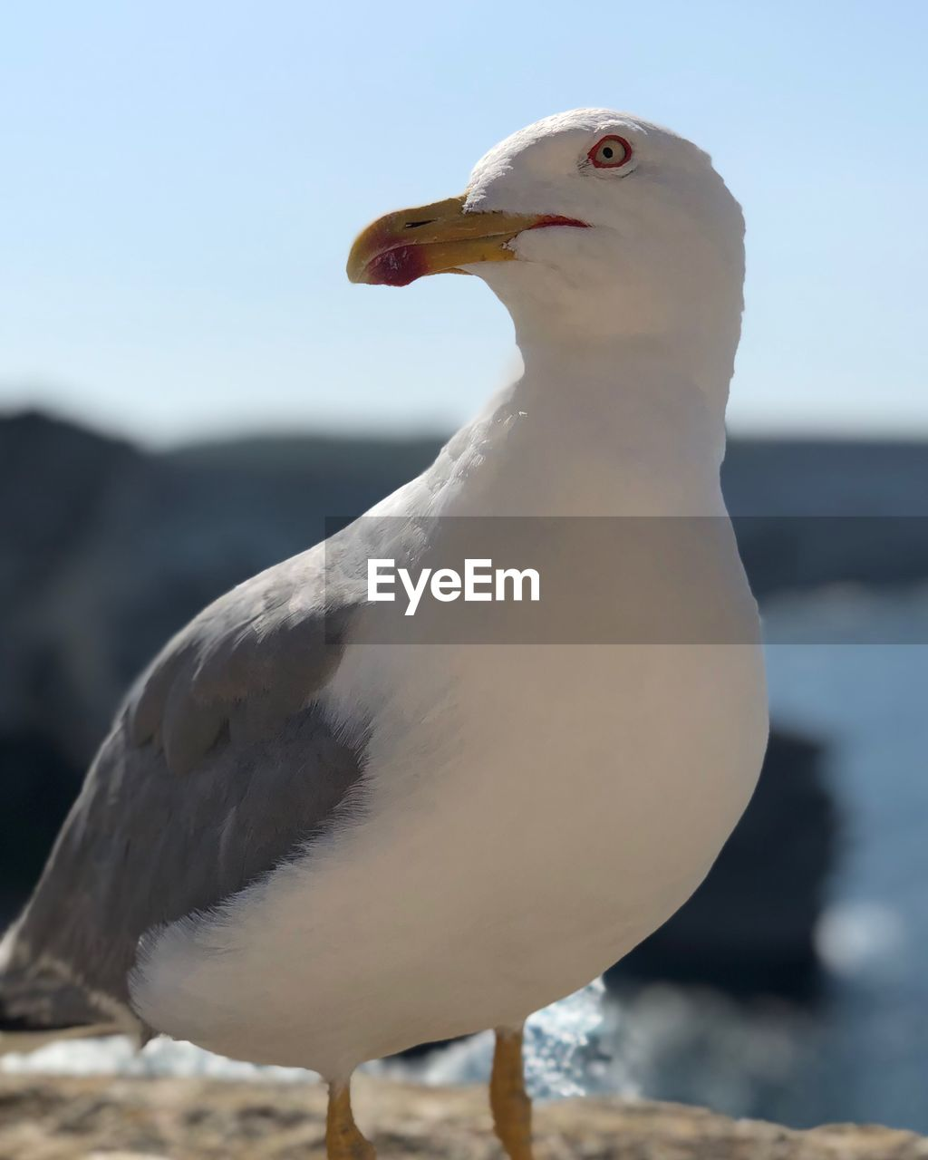 animal themes, animal, bird, animal wildlife, vertebrate, animals in the wild, one animal, seagull, focus on foreground, close-up, white color, nature, no people, day, sea bird, outdoors, sky, sea, perching, beak, animal head