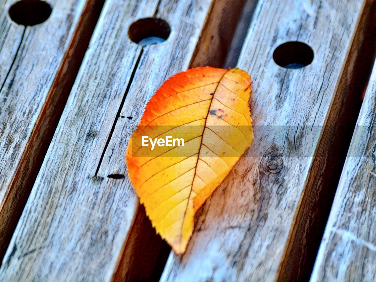 wood - material, close-up, no people, leaf, change, plant part, day, autumn, orange color, nature, selective focus, textured, dry, outdoors, pattern, plank, high angle view, bench, leaf vein, yellow, leaves, natural condition