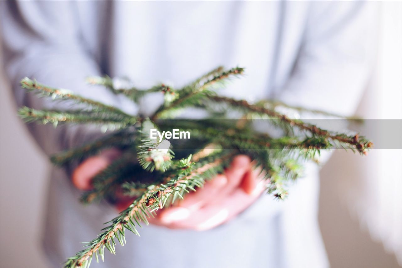 Close-Up Of Woman Holding Pine Needles