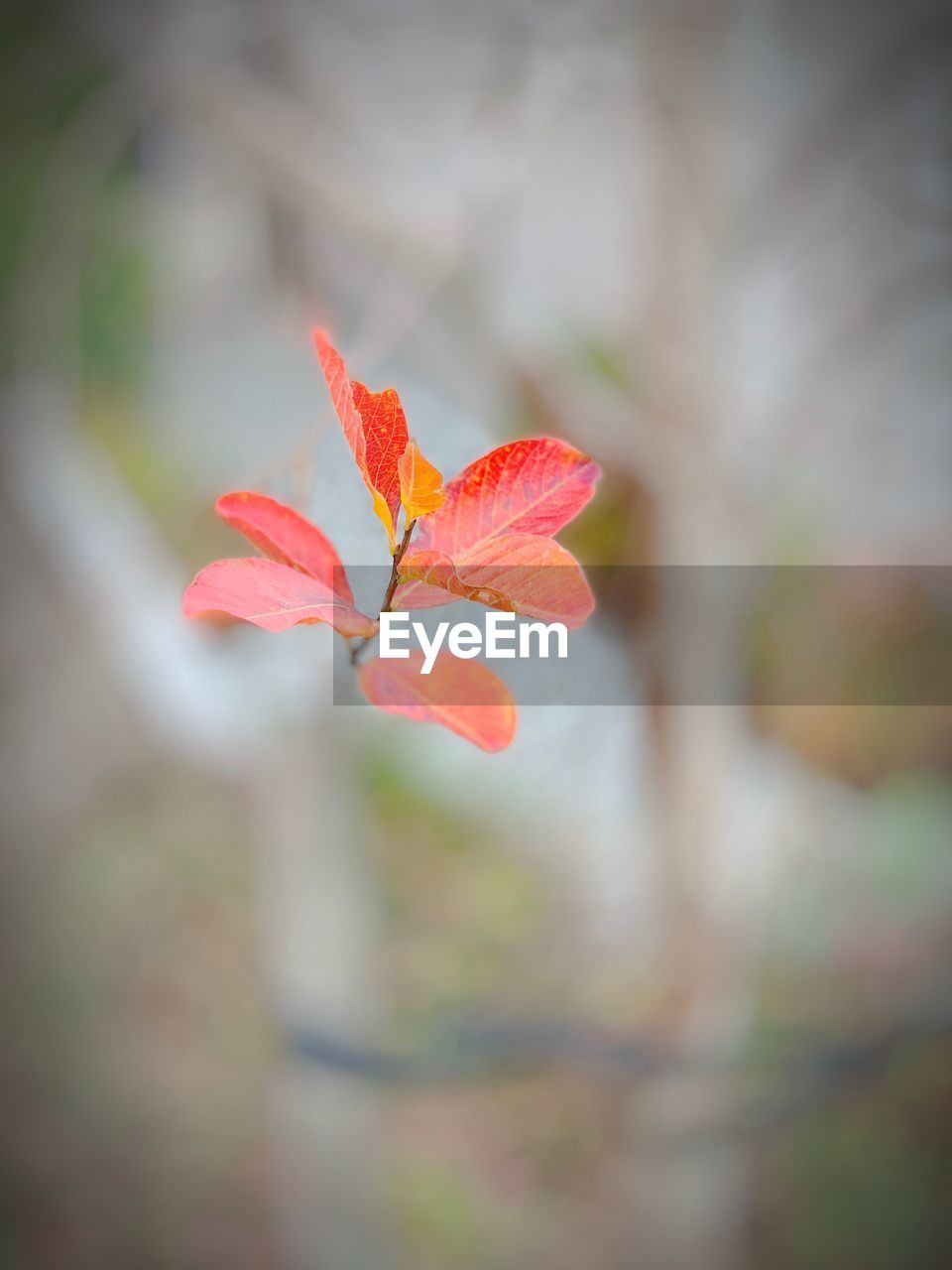 plant, flower, flowering plant, beauty in nature, close-up, growth, fragility, vulnerability, freshness, petal, focus on foreground, flower head, day, inflorescence, no people, nature, selective focus, red, leaf, plant part, outdoors