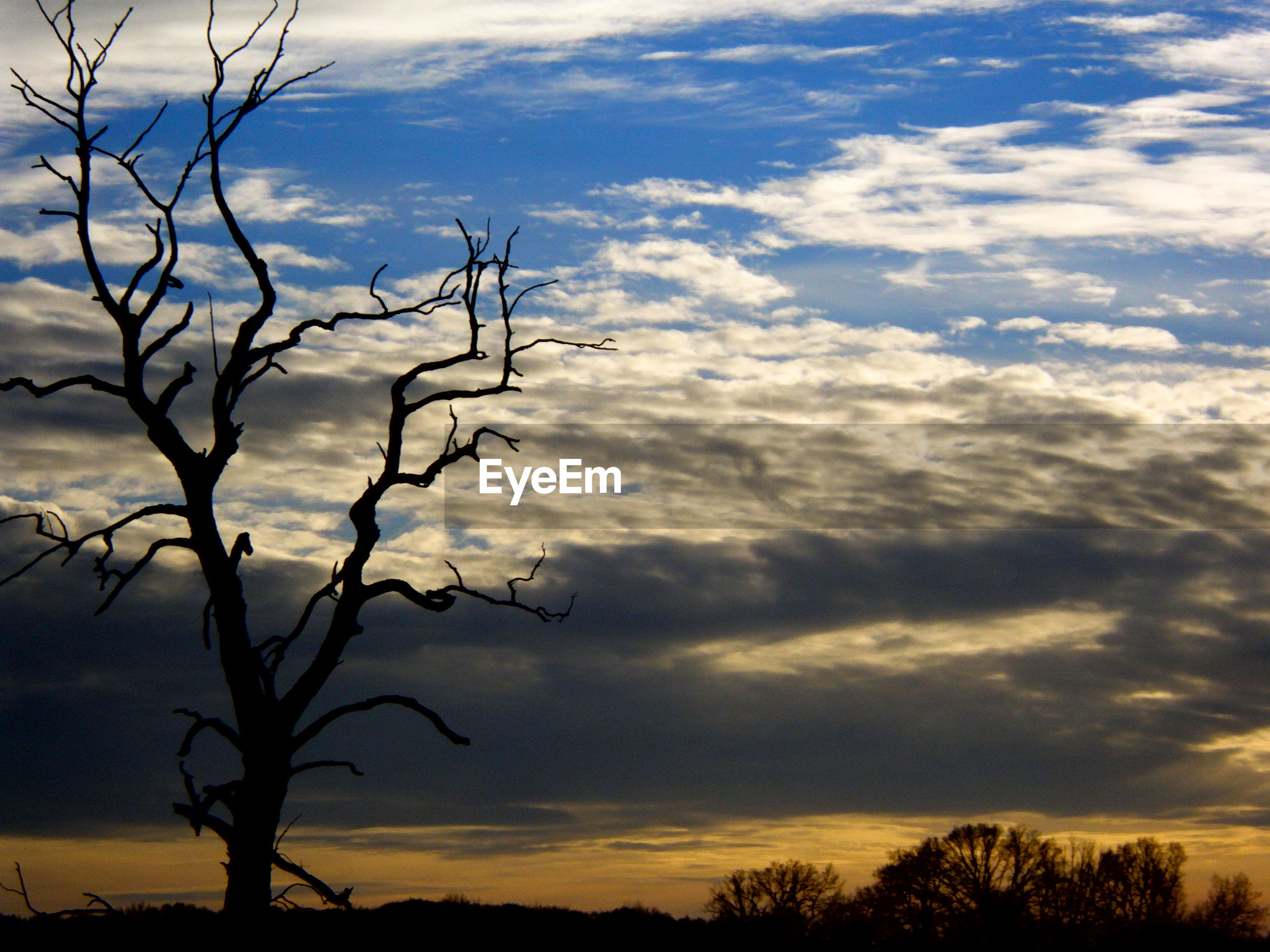 Silhouette bare tree against cloudy sky during sunset