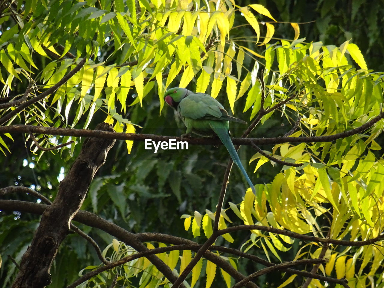 animal themes, animal, animal wildlife, bird, vertebrate, animals in the wild, plant, perching, one animal, tree, green color, branch, leaf, nature, plant part, no people, day, growth, focus on foreground, outdoors