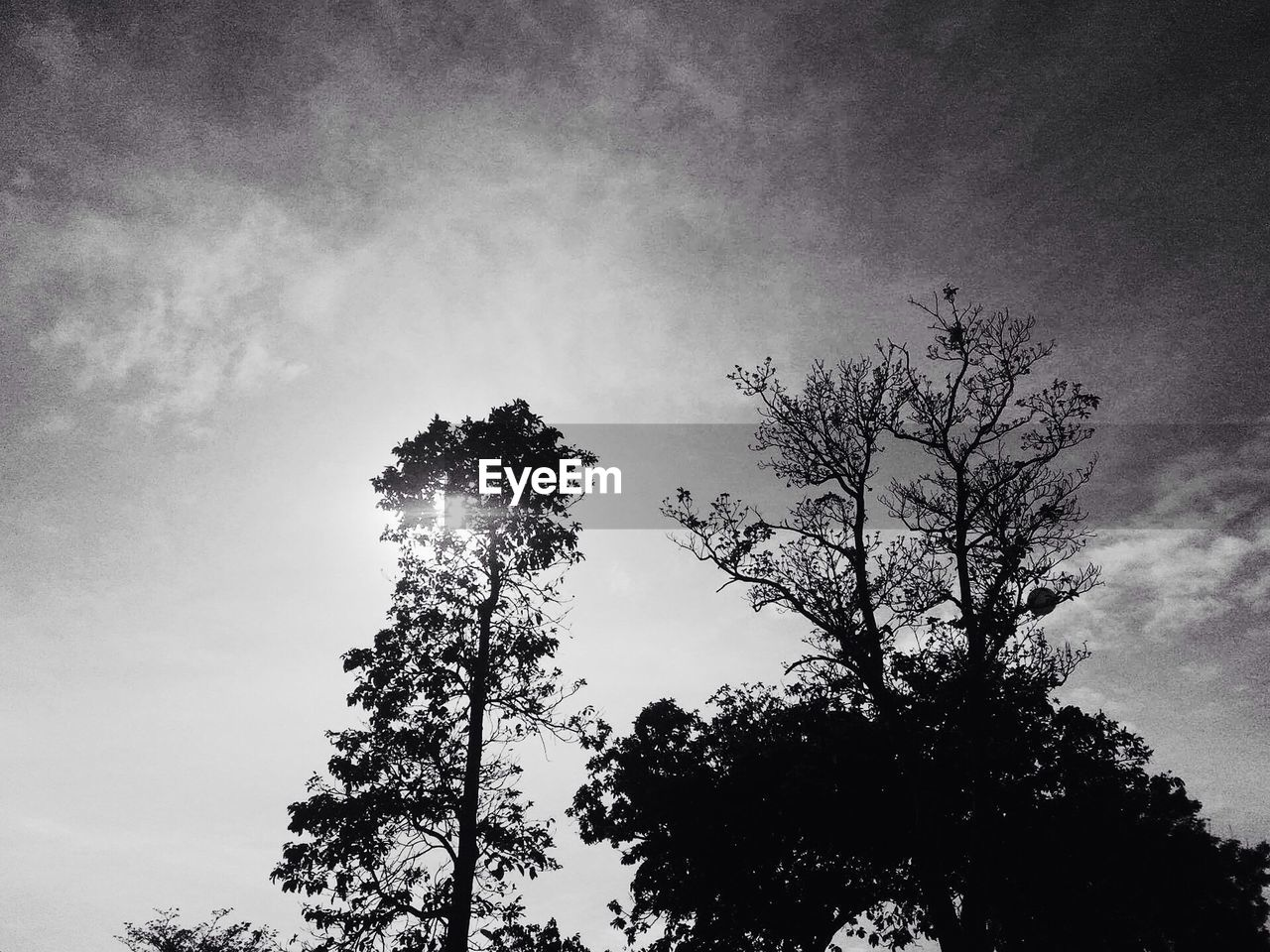tree, low angle view, sky, growth, nature, silhouette, outdoors, no people, beauty in nature, day, branch, tranquility