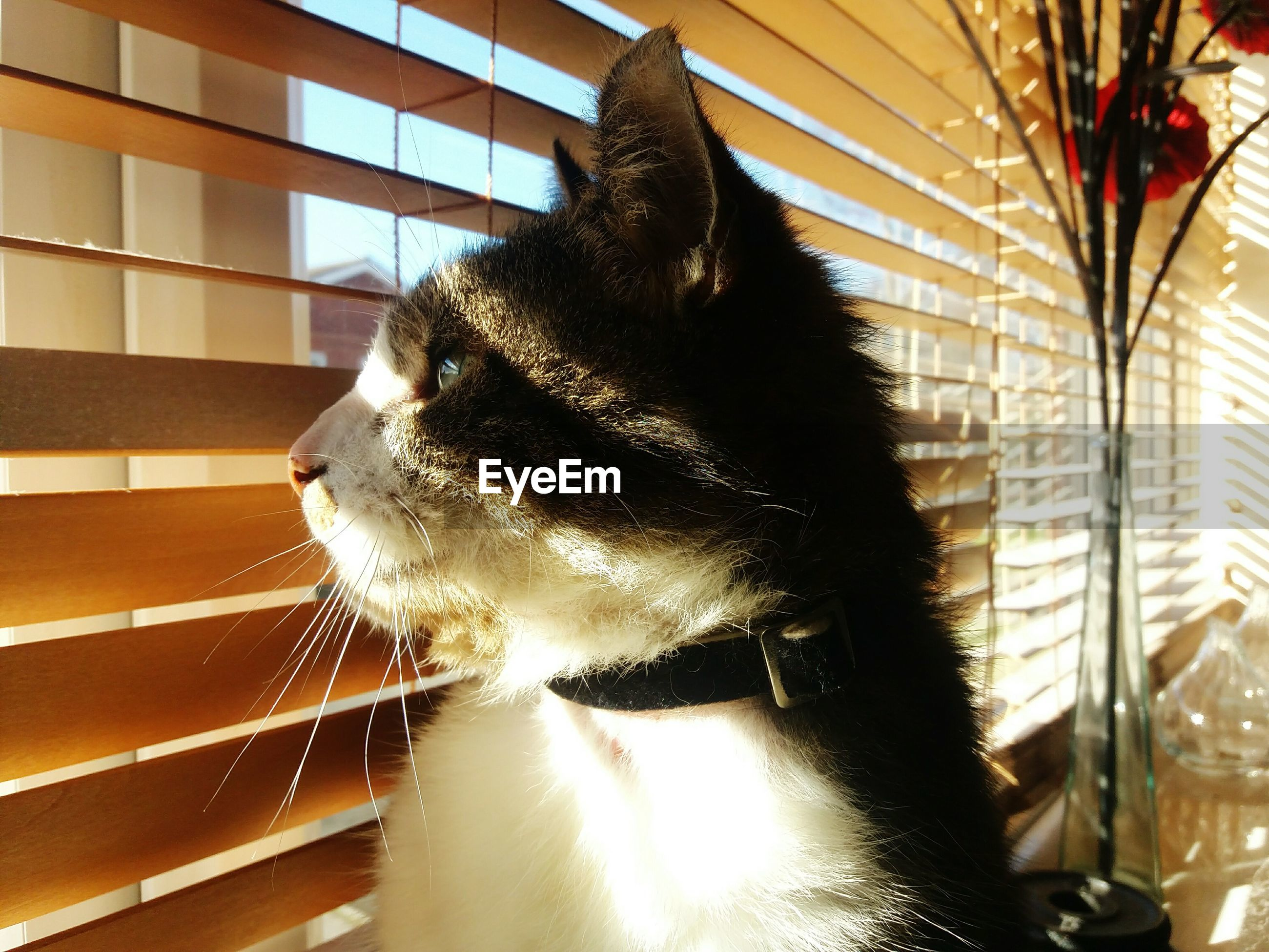 Cat looking though window at home