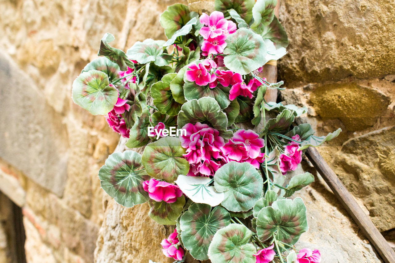 flower, flowering plant, plant, pink color, nature, freshness, beauty in nature, vulnerability, fragility, day, close-up, stone wall, growth, wall - building feature, no people, flower head, solid, wall, focus on foreground, petal, outdoors, flower arrangement, bouquet, bunch of flowers, flower pot