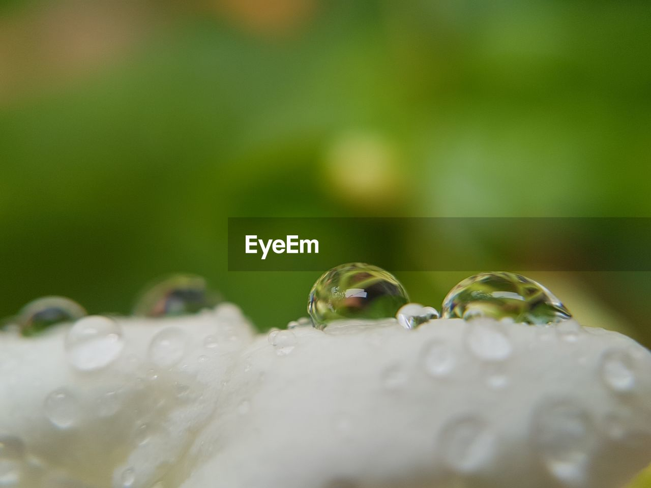 drop, close-up, water, nature, selective focus, flower, fragility, no people, green color, beauty in nature, growth, purity, wet, plant, freshness, day, outdoors, animal themes