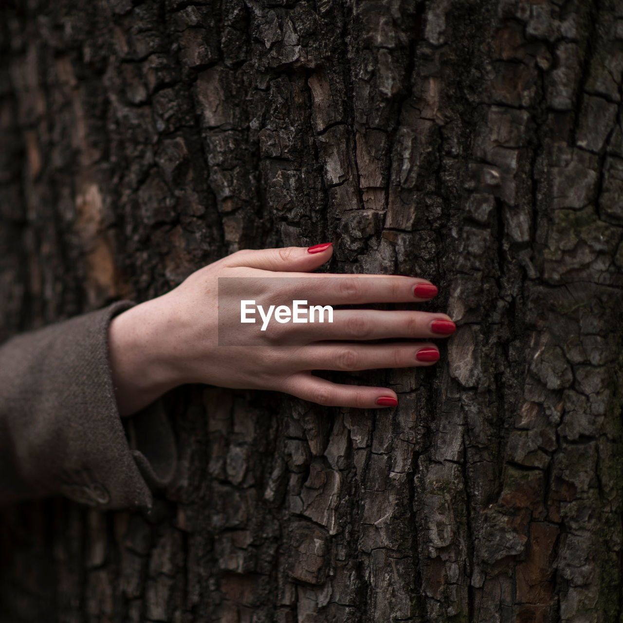 Cropped image of woman touching tree trunk