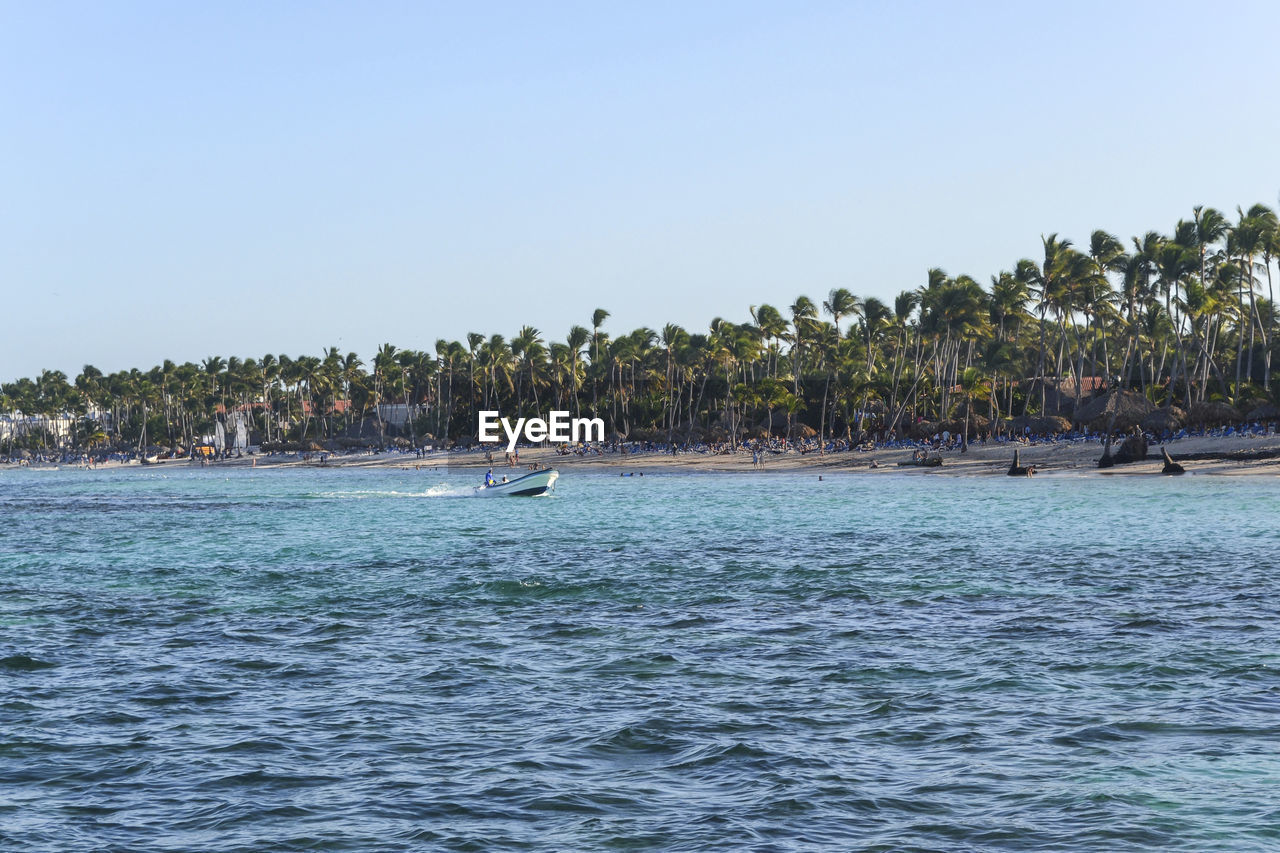 water, palm tree, clear sky, nautical vessel, tree, waterfront, sea, copy space, nature, day, outdoors, blue, scenics, tranquility, no people, beauty in nature, sky