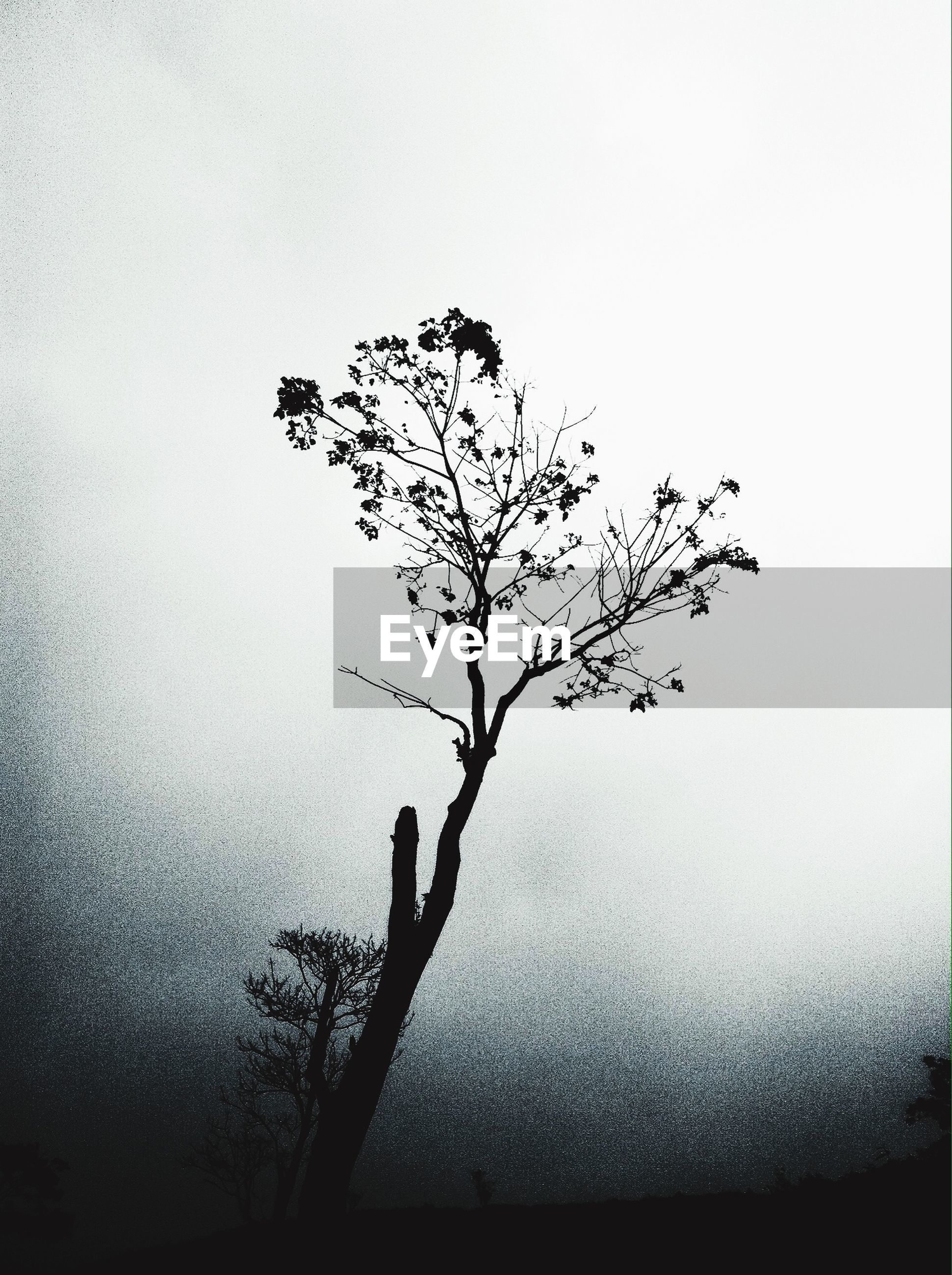 tree, branch, bare tree, clear sky, silhouette, tranquility, nature, growth, tree trunk, copy space, single tree, beauty in nature, no people, tranquil scene, outdoors, day, sky, wall - building feature, dusk
