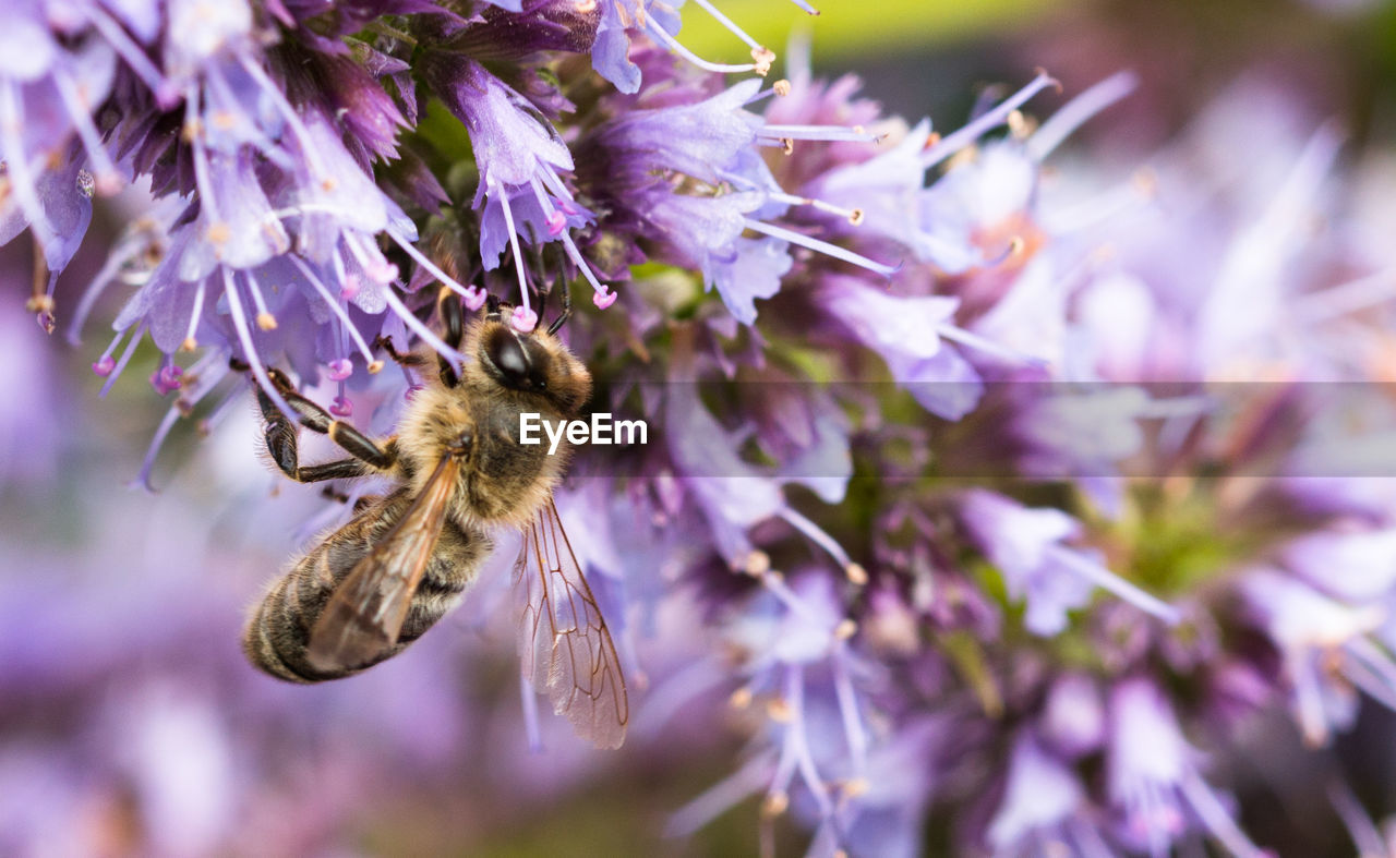 purple, flower, fragility, insect, nature, one animal, selective focus, animal themes, beauty in nature, no people, growth, animals in the wild, close-up, freshness, petal, day, pollination, outdoors, plant, flower head, bee