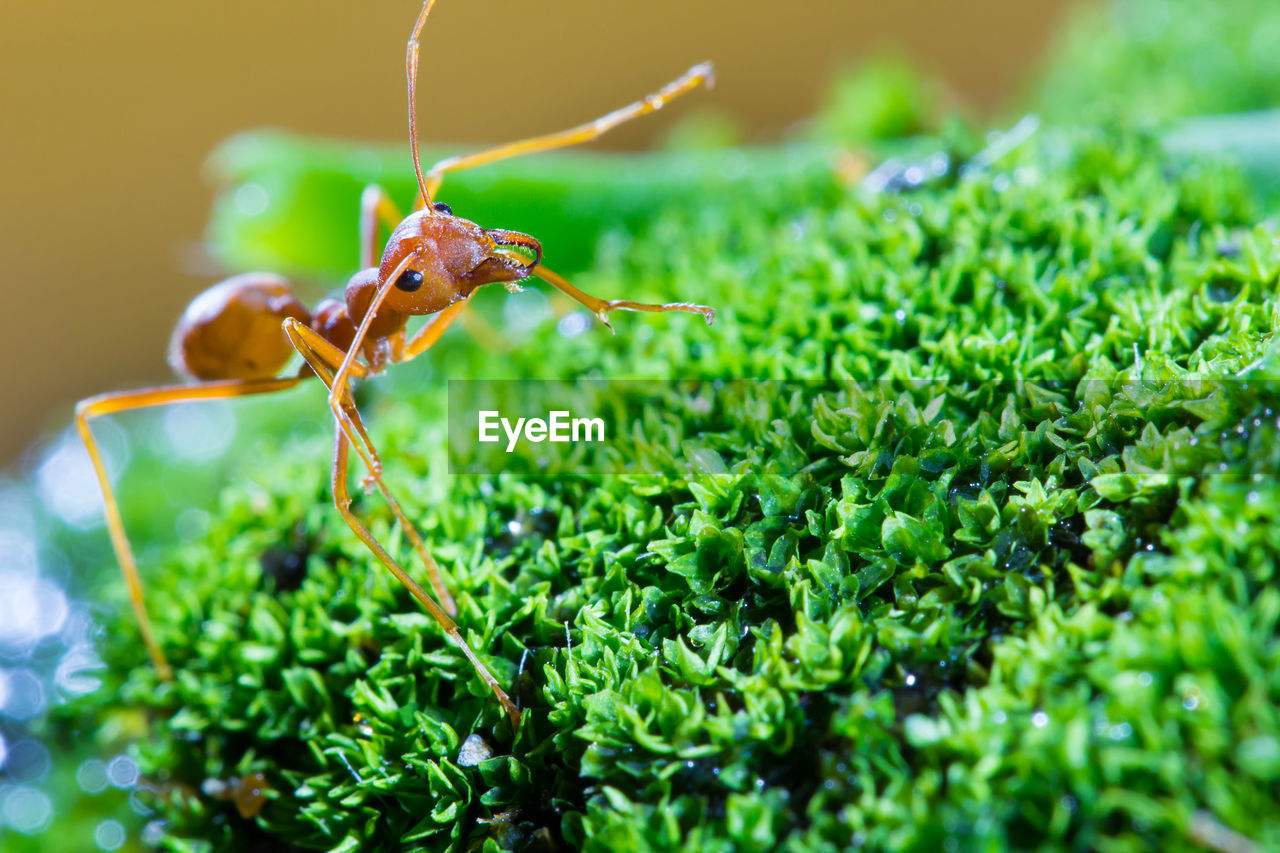 green color, plant, growth, close-up, invertebrate, insect, animals in the wild, selective focus, animal themes, animal wildlife, animal, nature, one animal, day, focus on foreground, no people, leaf, plant part, ant, freshness