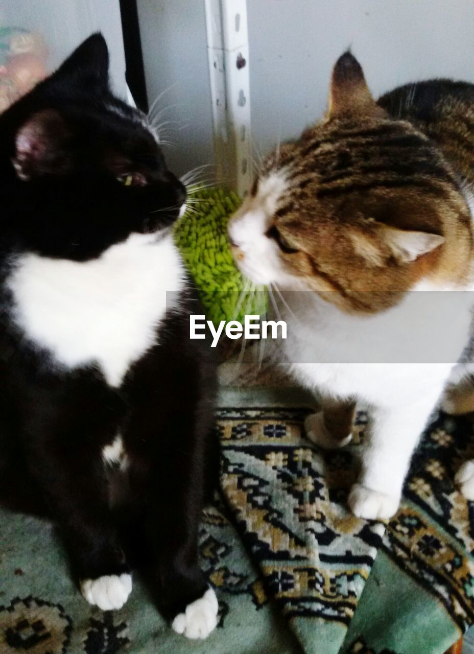 domestic cat, pets, domestic animals, animal themes, mammal, feline, cat, one animal, indoors, no people, high angle view, sitting, day